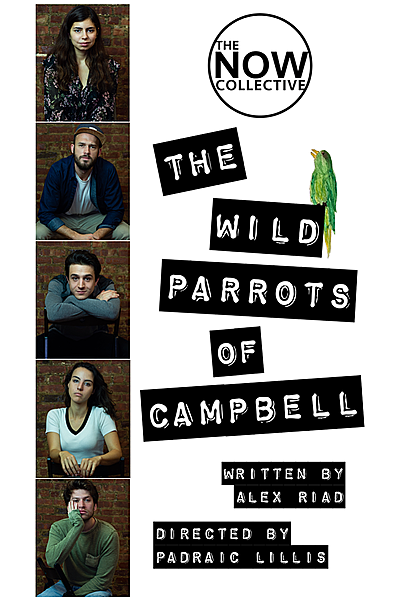 The Wild Parrots of Campbell